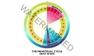 Waktu Subur - Menstrual Cycle
