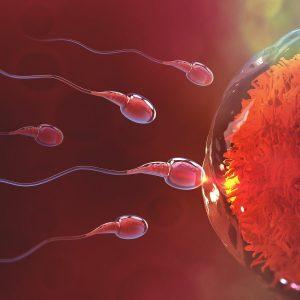 Waktu Subur - Tempoh Hidup Sperm