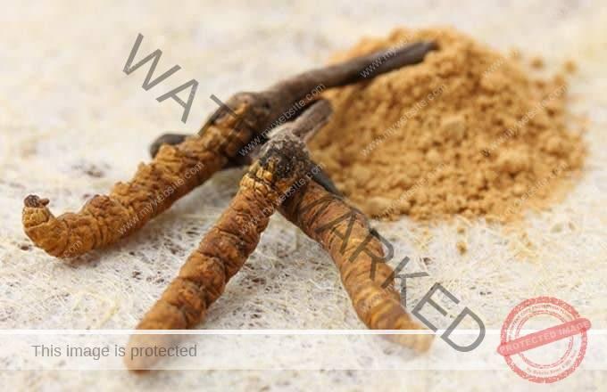 Herba Kuat Untuk Lelaki - Cordyceps