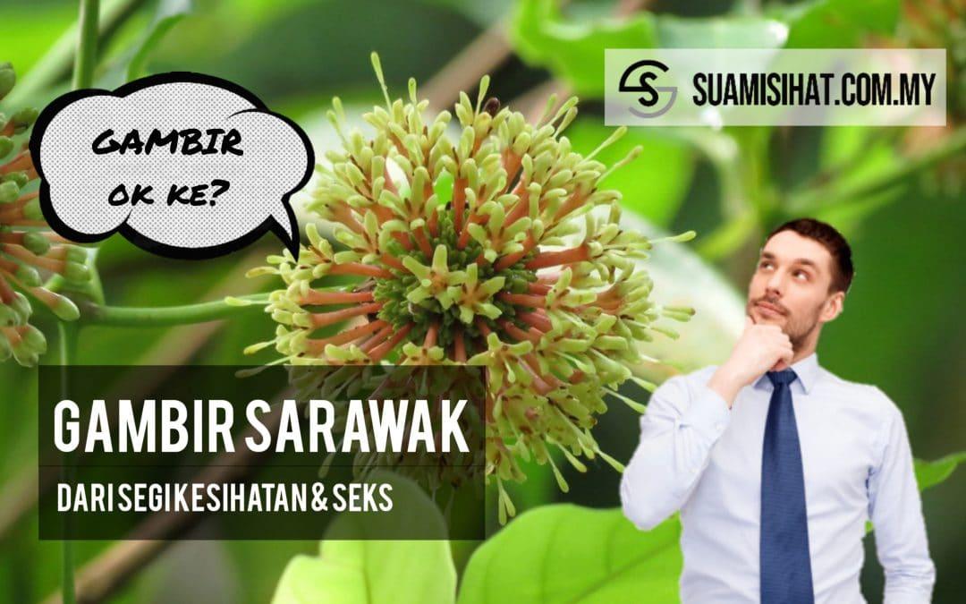 Gambir Sarawak – Dari Segi Prestasi Seks & Kesihatan, Berkesan Ke?